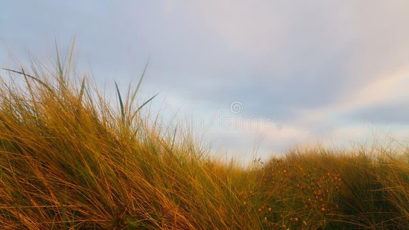 Erba della montagna dalla spiaggia fotografia stock