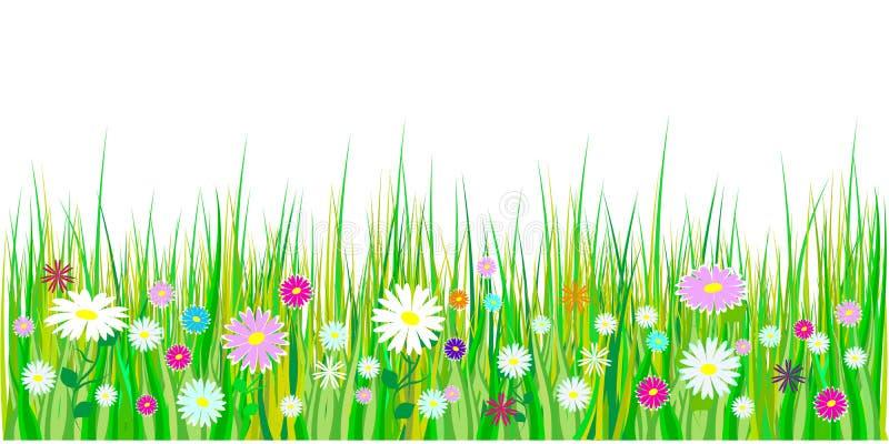 Erba della primavera e confini dei fiori La decorazione di Pasqua con l'erba ed il prato della molla fiorisce Isolato su priorità royalty illustrazione gratis
