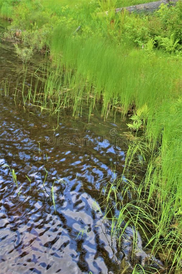 Erba della riva di Leonard Pond situata in Childwold, New York, Stati Uniti fotografia stock