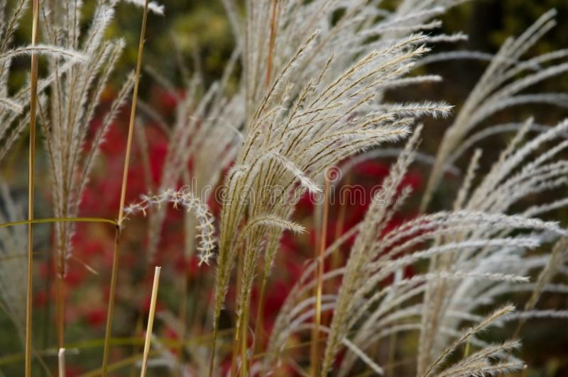 Autumn Grass fotografia stock