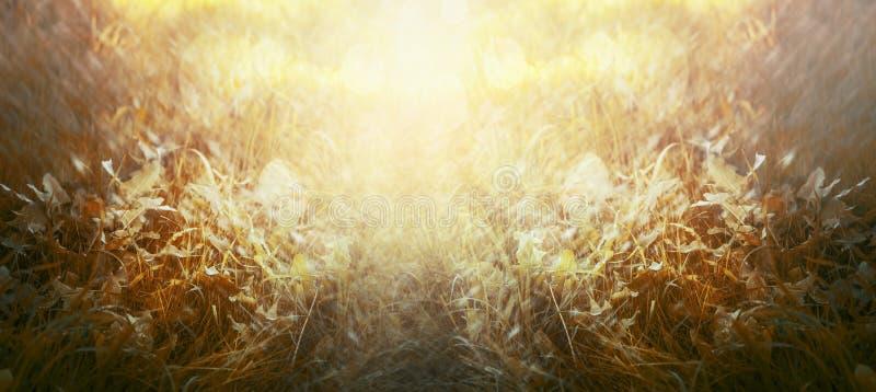 Erba di autunno con luce solare, sfondo naturale, insegna per il sito Web immagine stock