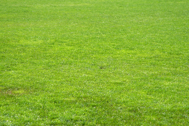 Erba di calcio fotografia stock libera da diritti