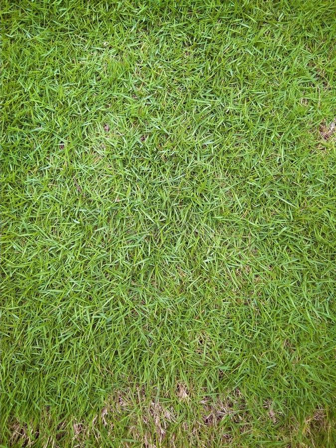 Erba di capelli verde fresca del Giappone fotografie stock