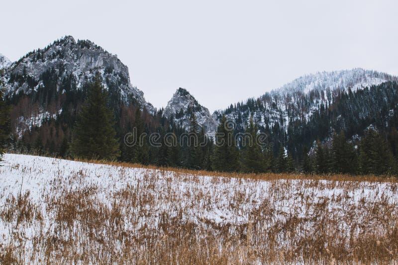 Erba di giallo del landscapeб della montagna di inverno nella parte anteriore immagine stock libera da diritti