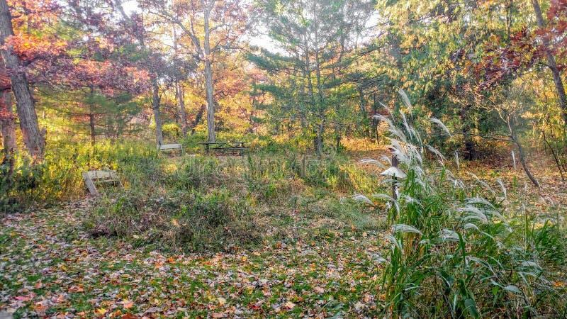 Erba di pampa ed alberi variopinti di caduta nel parco di stato del lago mirror fotografia stock libera da diritti