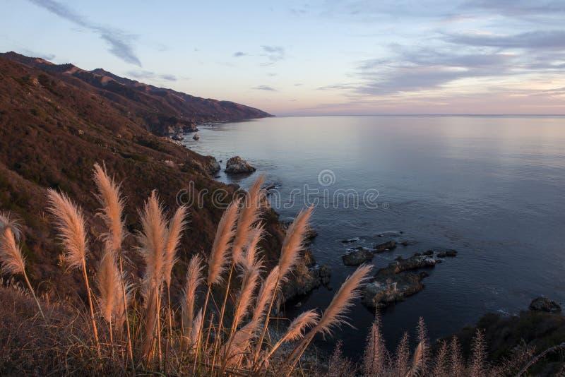 Erba di pampa lungo la linea costiera di Big Sur al tramonto immagini stock