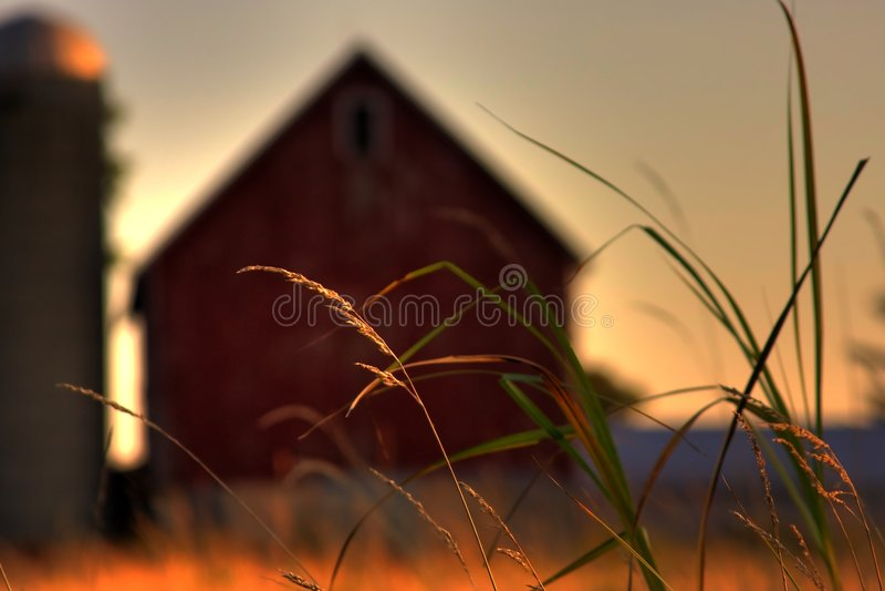 Erba di prateria dell'azienda agricola fotografia stock libera da diritti