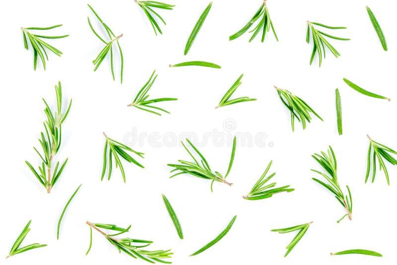 Erba di rosmarino fresca isolata su sfondo bianco, vista superiore con spazio di copia fotografia stock