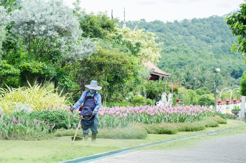 Erba di taglio del giardiniere dalla falciatrice da giardino immagine stock libera da diritti