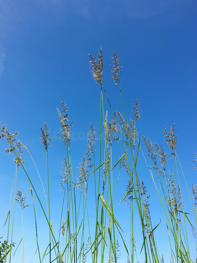 erba e bluesky sulla montagna fotografia stock libera da diritti