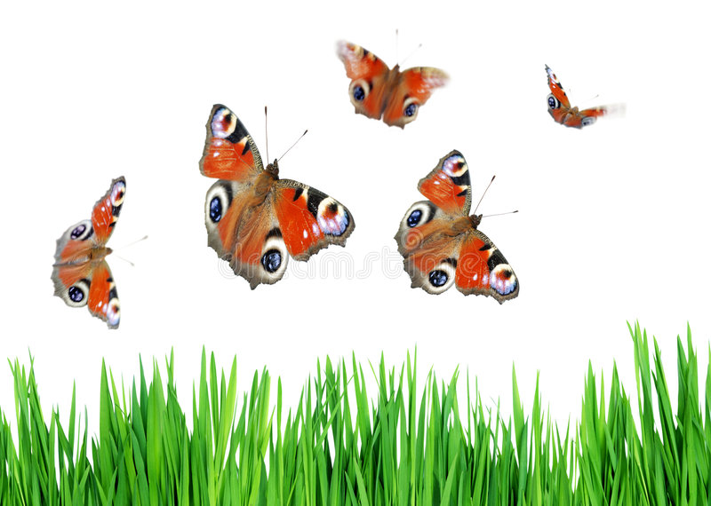 Erba e farfalle fotografia stock