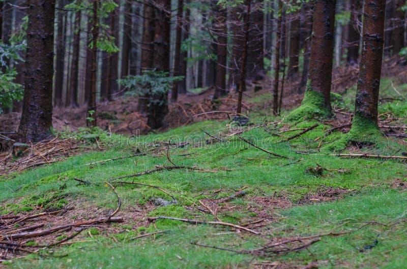 Erba e muschio nella foresta immagini stock libere da diritti