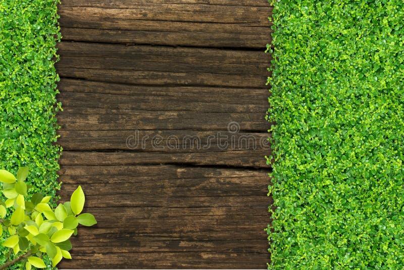 Erba e piccole piante verdi fotografie stock