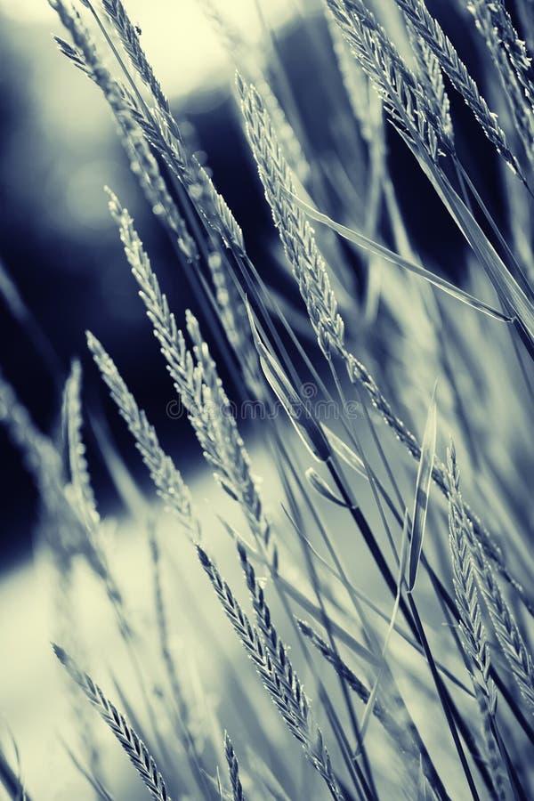 Erba e punte, sfondo naturale in bianco e nero, d'imitazione fotografia stock libera da diritti