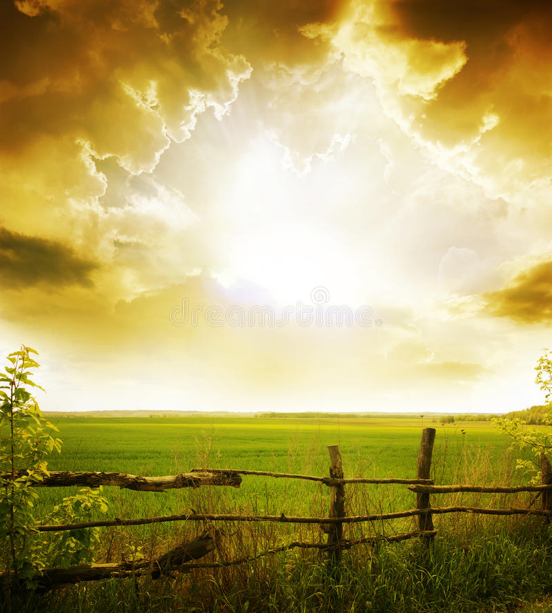 Erba e tramonto fotografia stock libera da diritti