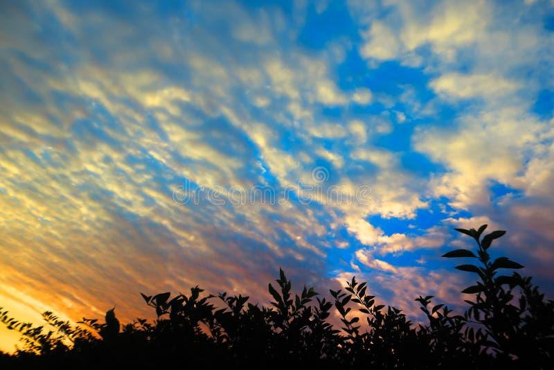 Erba ed alba romantica immagine stock libera da diritti