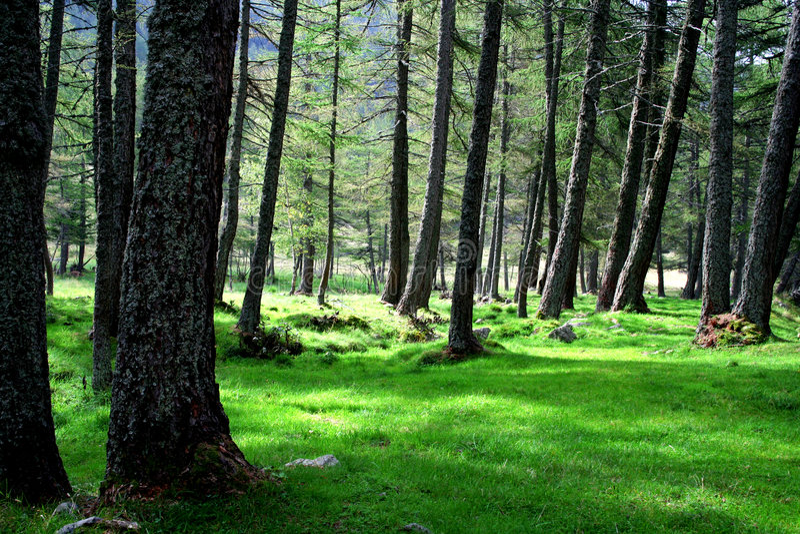 Erba ed alberi nella foresta fotografie stock