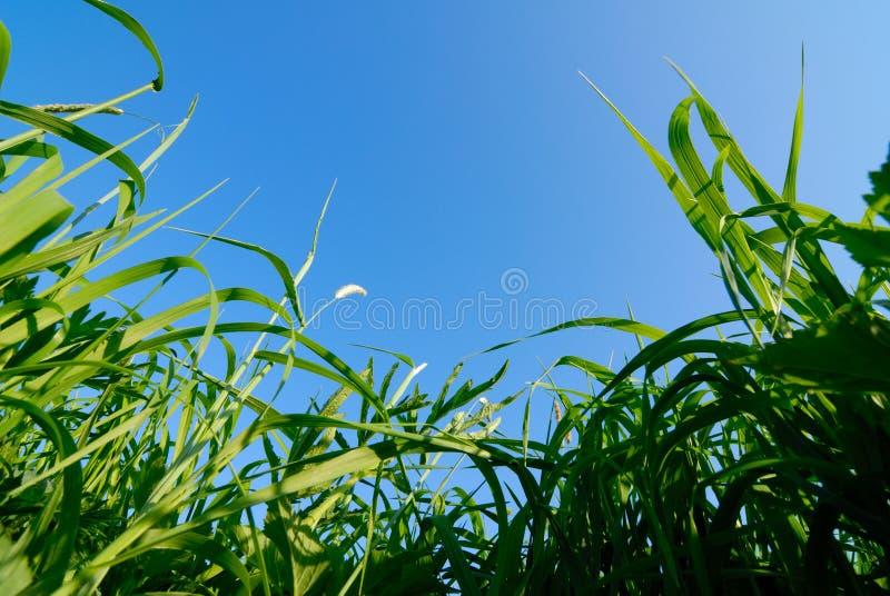 Erba ed il cielo immagine stock