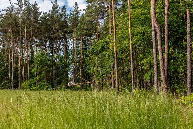 Erba fertile verde i la foresta fotografia stock