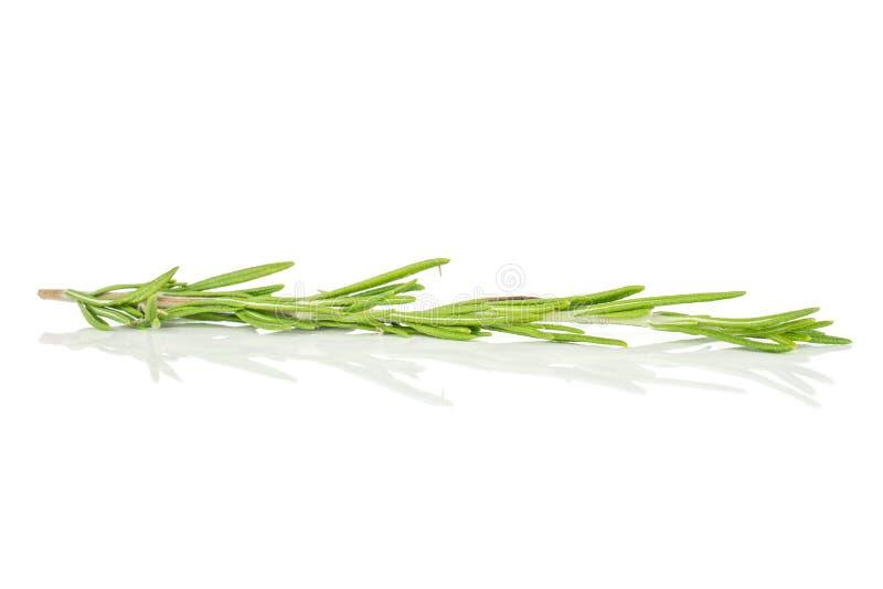 Erba fresca dei rosmarini su bianco fotografia stock libera da diritti