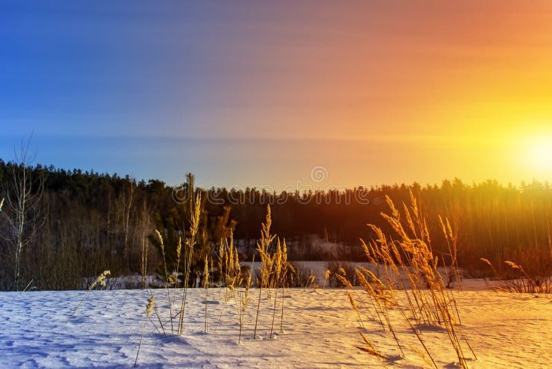 Erba gelida al tramonto di inverno Priorità bassa di inverno immagini stock libere da diritti