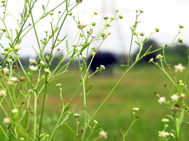 Erba il fiore immagine stock