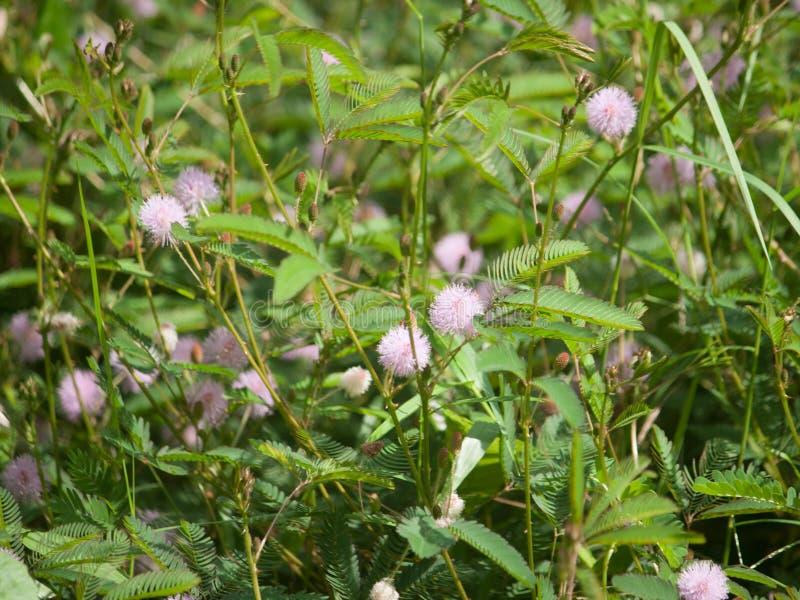Erba il fiore fotografie stock libere da diritti