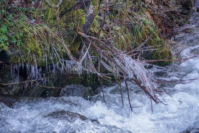 Erba l'acqua congelata nel fondo copre di foglie corrente dell'acqua di scena del muschio dei rami del ghiaccio del whitewater di immagini stock