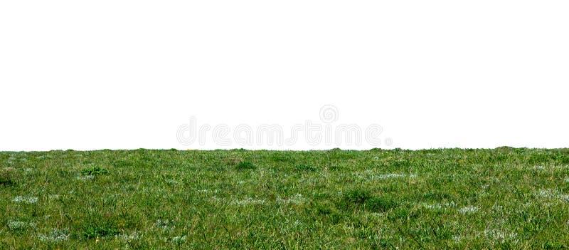 Erba naturale verde isolata fotografia stock