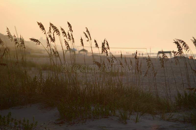 Erba nelle dune   immagine stock libera da diritti