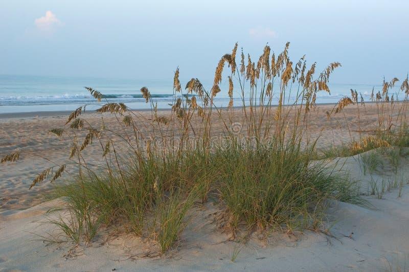 Erba nelle dune   fotografia stock