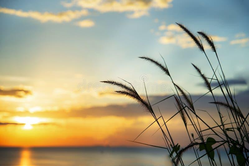 Erba o canna della siluetta con il mare arancio blu del cielo di estate della sfuocatura al tramonto per il fondo di viaggio dell fotografie stock libere da diritti