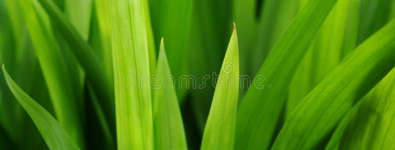 Erba più verde fotografia stock libera da diritti