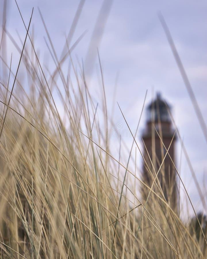 Erba secca con faro sullo sfondo vicino a Prerow, Fischland-Darss-Zingst fotografia stock