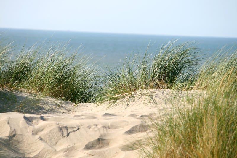 Erba sulla duna fotografie stock libere da diritti