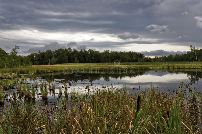 Erba sviluppata nel piccolo lago immagini stock libere da diritti
