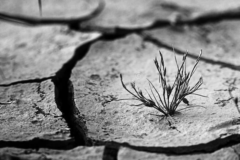 Erba, terra asciutta e incrinata, fame immagini stock libere da diritti