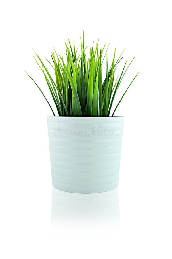 Erba in vaso bianco immagine stock libera da diritti