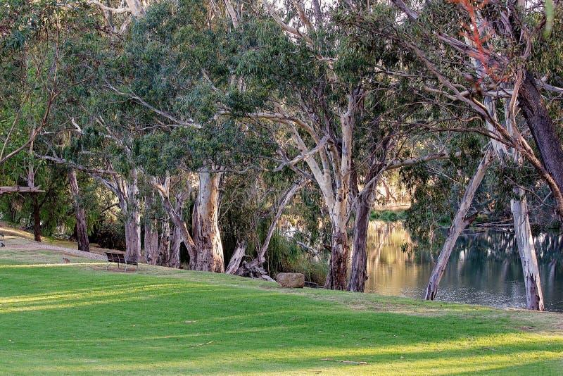 Erba verde accanto ad un fiume scenico immagine stock