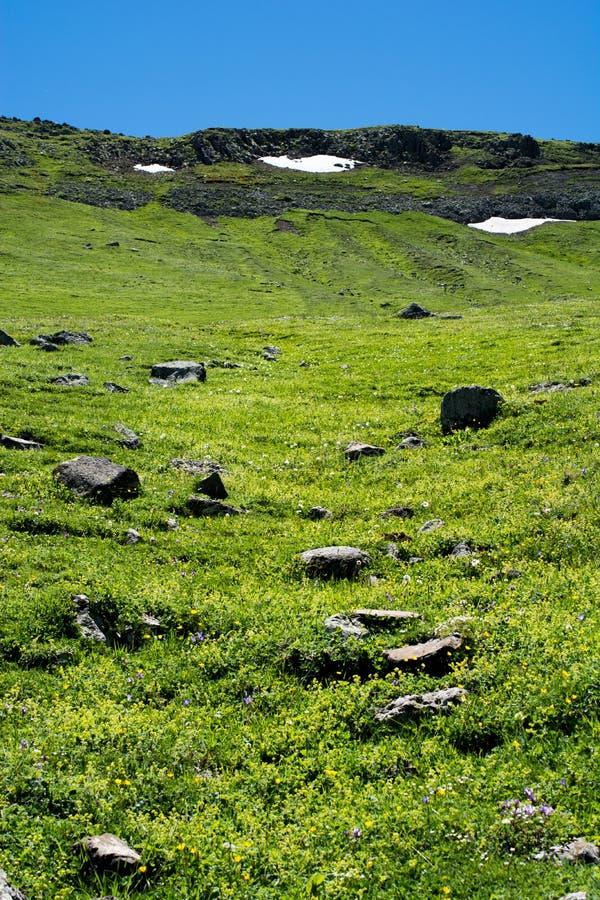 Erba verde come priorità bassa fotografia stock