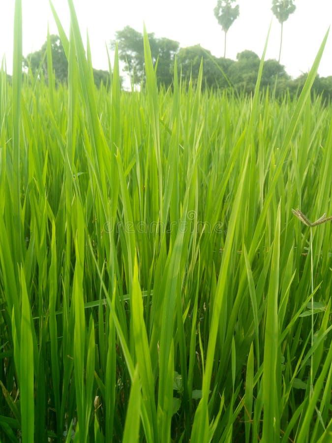 Erba verde con cielo blu fotografie stock
