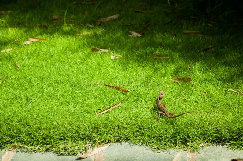 Download Erba Verde Con Il Paesaggio Della Lucertola Fotografia Stock - Immagine di strada, front: 56875526