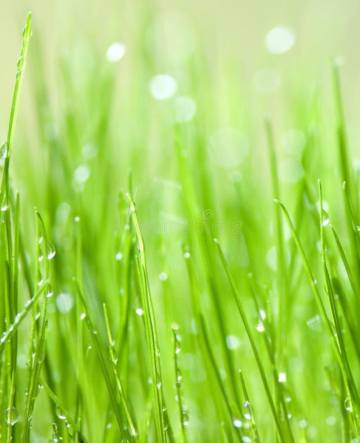 Erba verde con le gocce dell'acqua fotografie stock