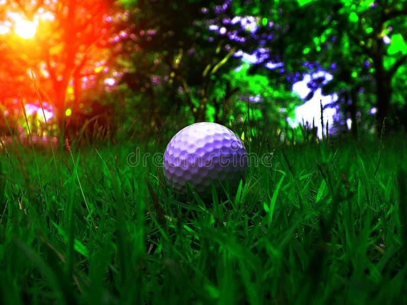 Erba verde con una palla da golf molto attentamente a fuoco, fotografia stock
