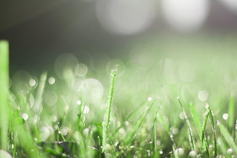Erba verde coperta in rugiada fotografia stock