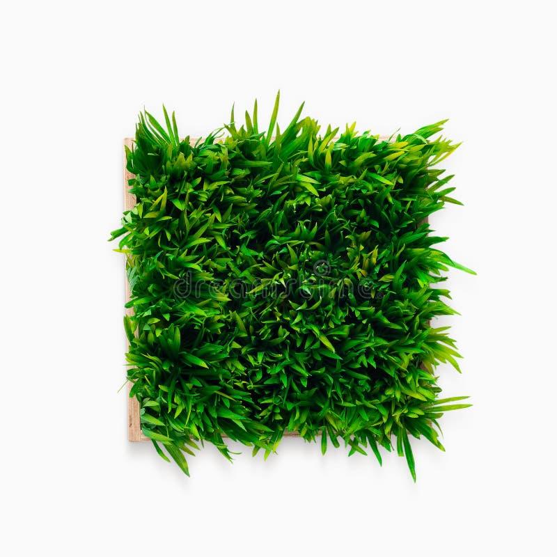 Erba verde decorativa in vaso da fiori isolato su bianco fotografia stock libera da diritti