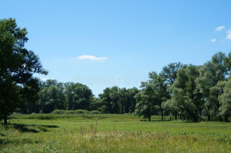 Erba verde del prato, alberi di salice verdi, canna, cielo blu immagini stock