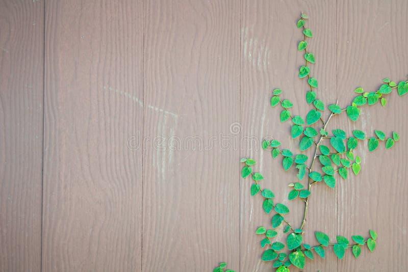 Erba verde della molla fresca e pianta della foglia sopra il fondo di legno del recinto fotografie stock libere da diritti