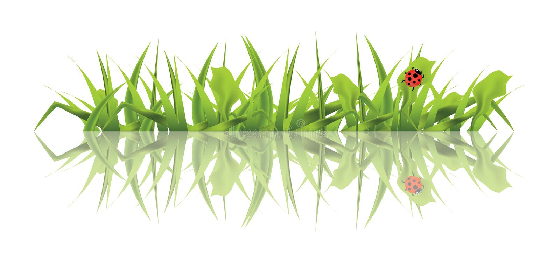 Erba verde della primavera con la coccinella isolata su fondo bianco illustrazione vettoriale