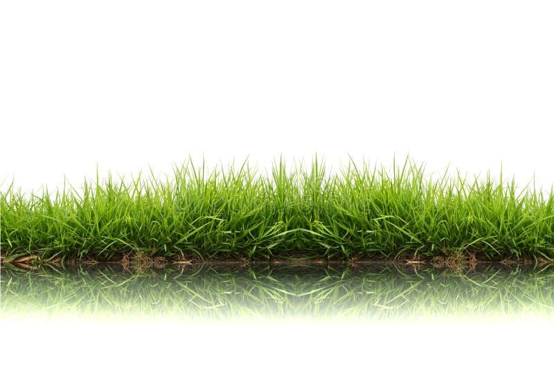 Erba verde della sorgente fresca immagine stock libera da diritti